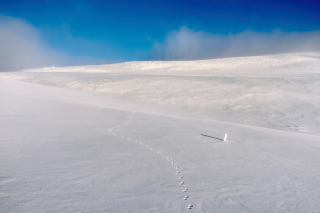 Footprints on snow field Picture for Android, iPhone and iPad
