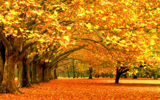 Autumn Trees Background for Widescreen Desktop PC 1920x1080 Full HD