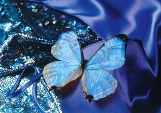 Blue Butterfly Wallpaper for Android, iPhone and iPad