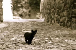 Little Black Kitten Picture for Android, iPhone and iPad