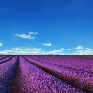 Lavender Fields Location Picture for 208x208