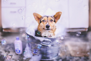 Dog And Bubbles sfondi gratuiti per Fullscreen Desktop 800x600