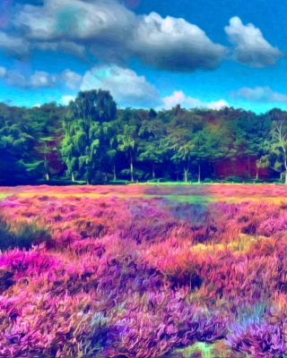 Kostenloses Field Of Color Wallpaper für Nokia C6