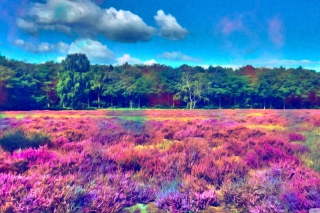 Field Of Color Wallpaper for Desktop 1280x720 HDTV