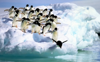 Penguins On An Iceberg - Fondos de pantalla gratis