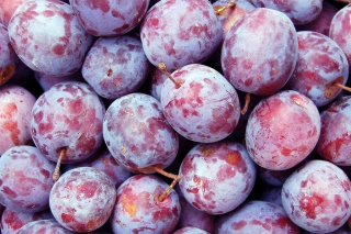 Free Plums Picture for Android, iPhone and iPad