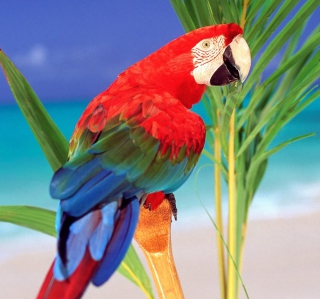 Картинка Colorful Parrot для телефона и на рабочий стол iPad mini