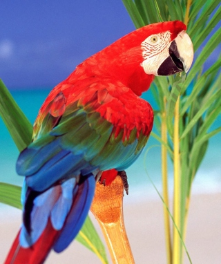 Free Colorful Parrot Picture for 132x176