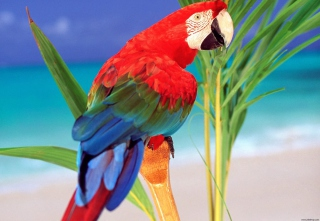 Colorful Parrot Background for Android, iPhone and iPad