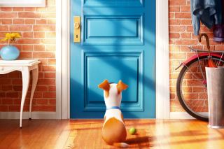 The Secret Life of Pets Picture for Android, iPhone and iPad
