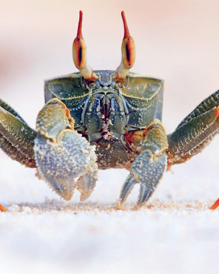 Free Ghost crab Picture for iPhone 6 Plus