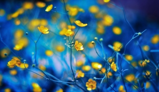 Spring Yellow Flowers Blue Bokeh Wallpaper for Android, iPhone and iPad