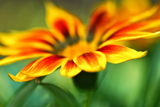 Macro Flower Photo Wallpaper for 480x320
