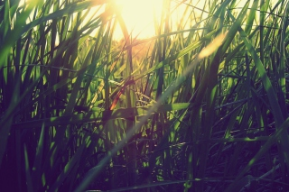 Grass Under Sun sfondi gratuiti per cellulari Android, iPhone, iPad e desktop