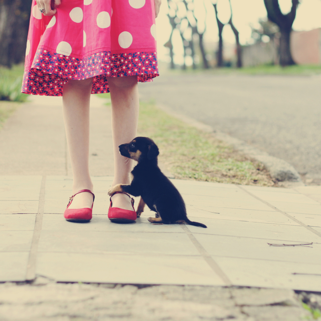 Screenshot №1 pro téma Girl In Polka Dot Dress And Her Puppy 1024x1024