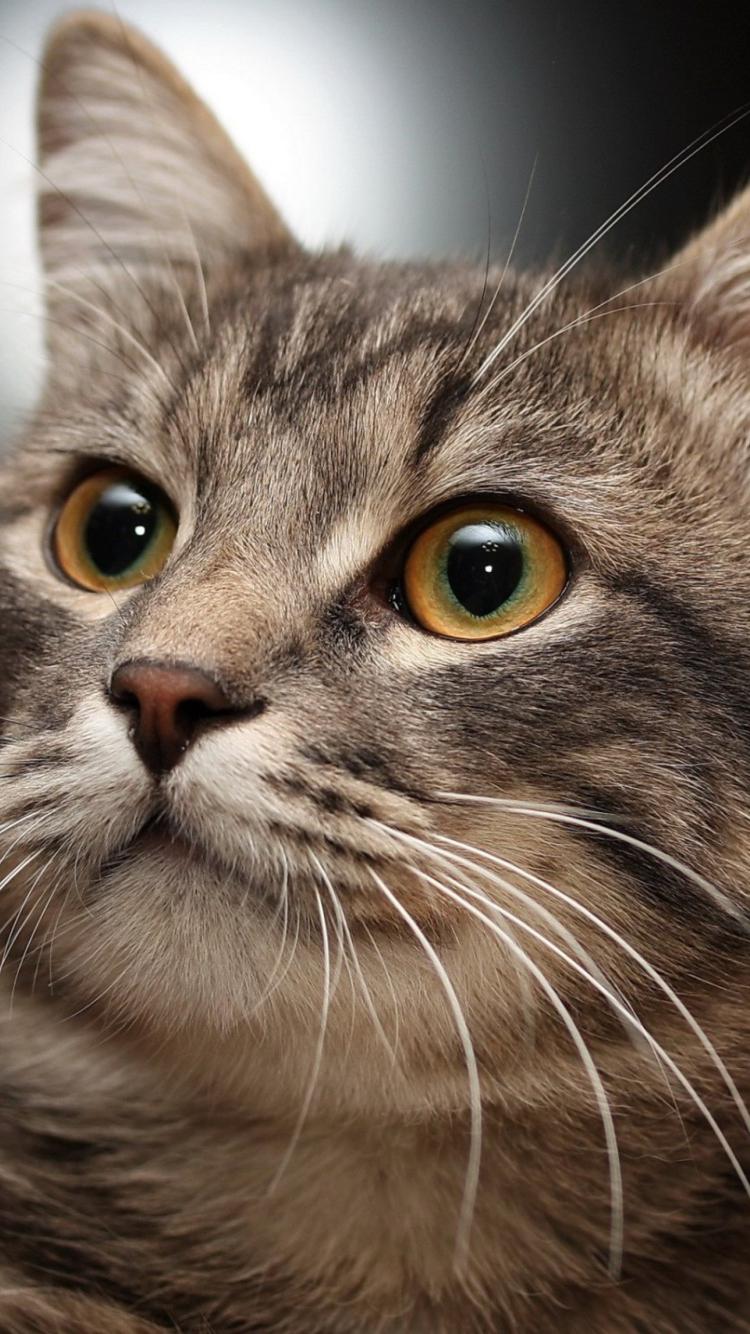 картинки кошек на телефоны базовых цвета