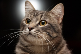 Lovely Kitten Wallpaper for Android, iPhone and iPad