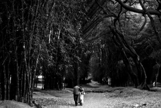 Romantic Walk Wallpaper for Android, iPhone and iPad