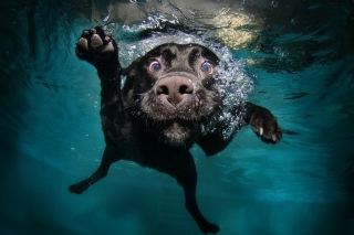 Dog Swimming Wallpaper for Android, iPhone and iPad