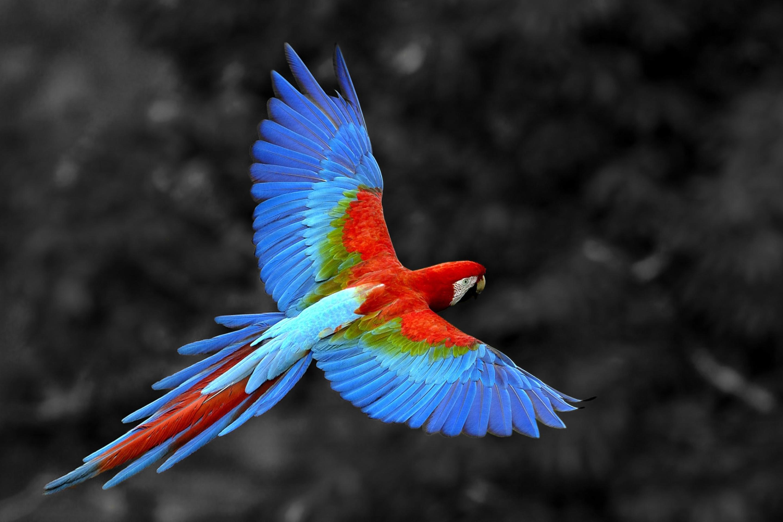 попугай краски рисунок без смс
