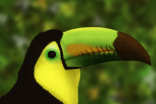 Toucan Picture for Android, iPhone and iPad