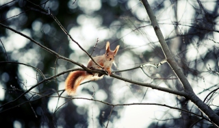 Free Cute Squirrel Picture for Android, iPhone and iPad