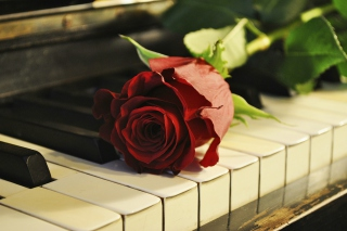 Free Rose On Piano Picture for Android, iPhone and iPad