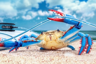 Blue crab Background for Android, iPhone and iPad