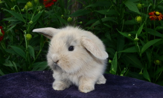 Baby Rabbit Picture for Android, iPhone and iPad