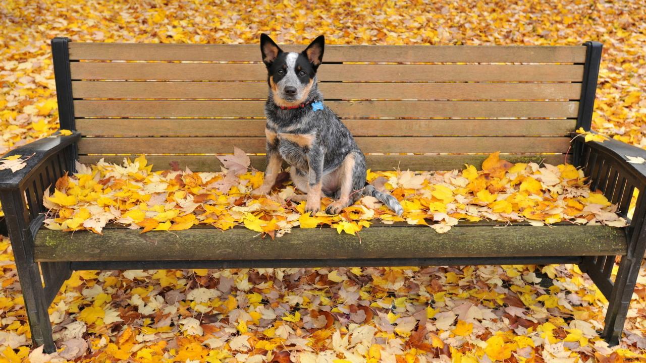 Dog On Autumn Bench