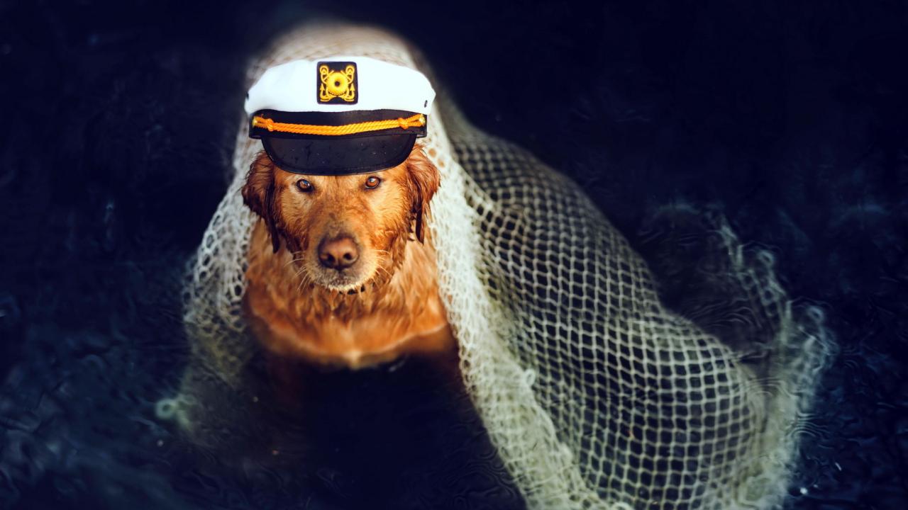 Captain Dog