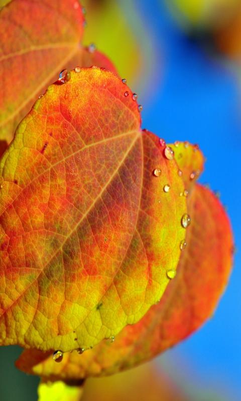 Leaf And Drops per Nokia Lumia 800