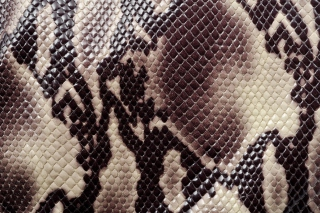 Snake Skin Background for HTC Desire HD