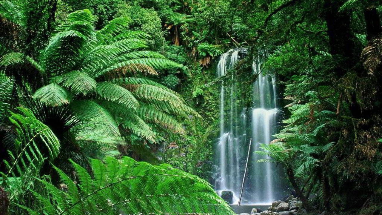 Tropical Forest Waterfall