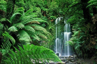 Free Tropical Forest Waterfall Picture for Android, iPhone and iPad