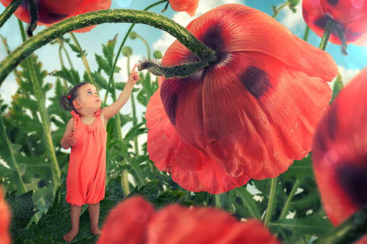 Little kid on poppy flower wallpaper