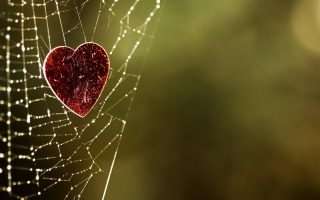 Heart In Spider Web sfondi gratuiti per cellulari Android, iPhone, iPad e desktop