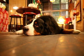 Dog in Cafe Background for Android, iPhone and iPad
