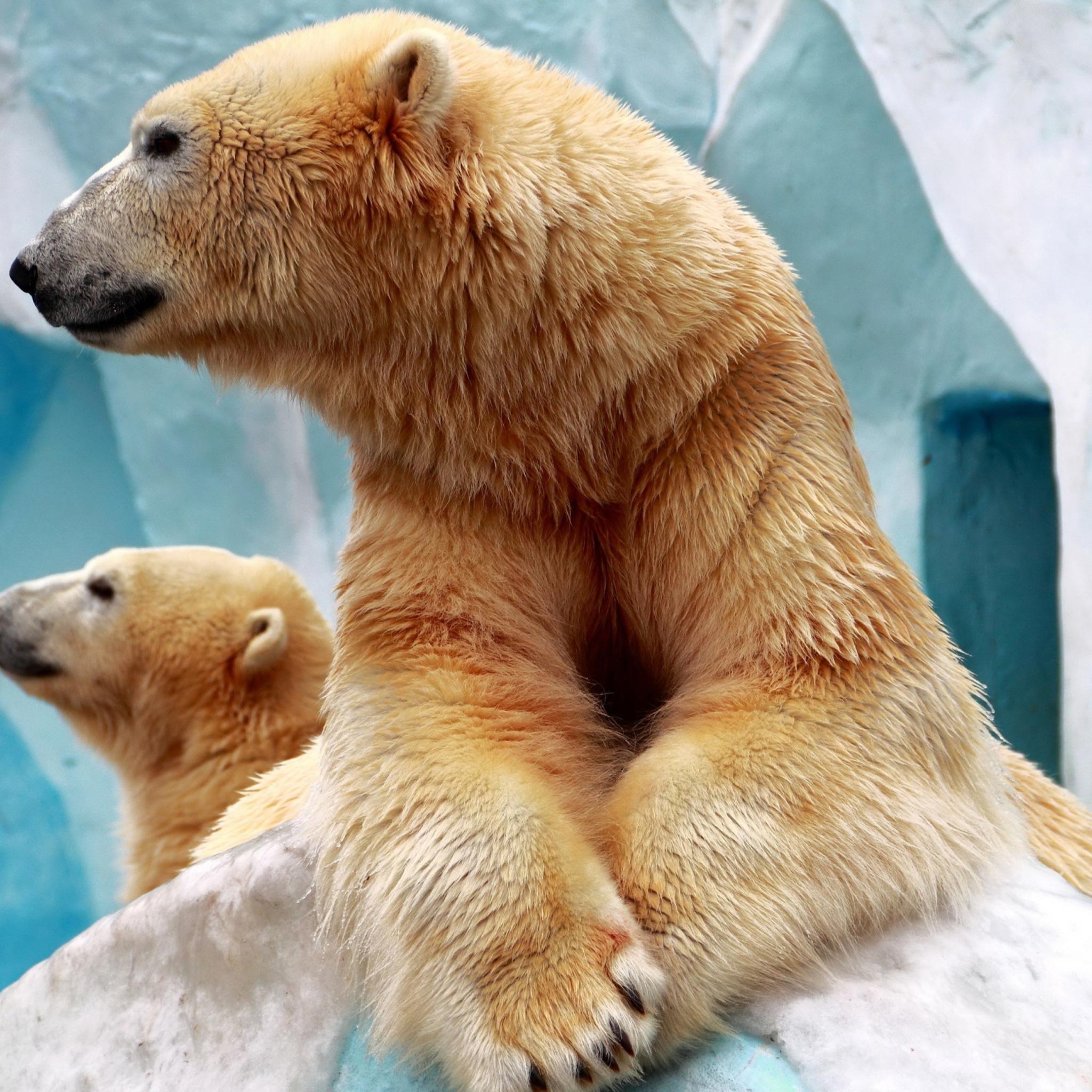 Картинки медведей для телефона