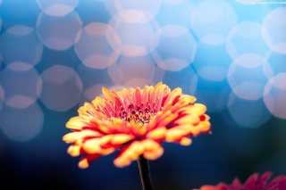 Macro Flower Bokeh HD Picture for Android, iPhone and iPad