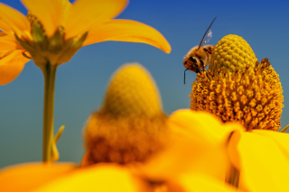 Honey bee Background for Android, iPhone and iPad