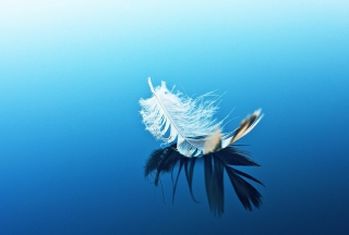 Feather On Blue Surface Background for Android, iPhone and iPad