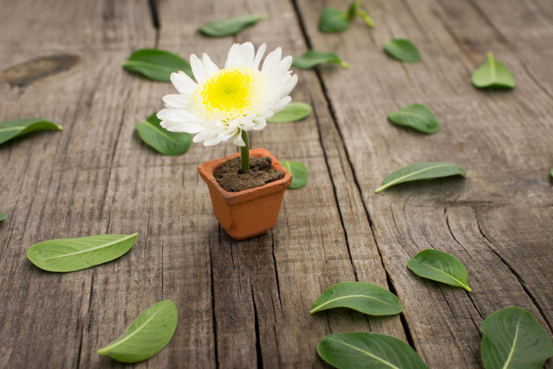 Цветок в горшке загрузить