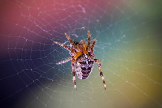 Spider on a Rainbow Wallpaper for Android, iPhone and iPad
