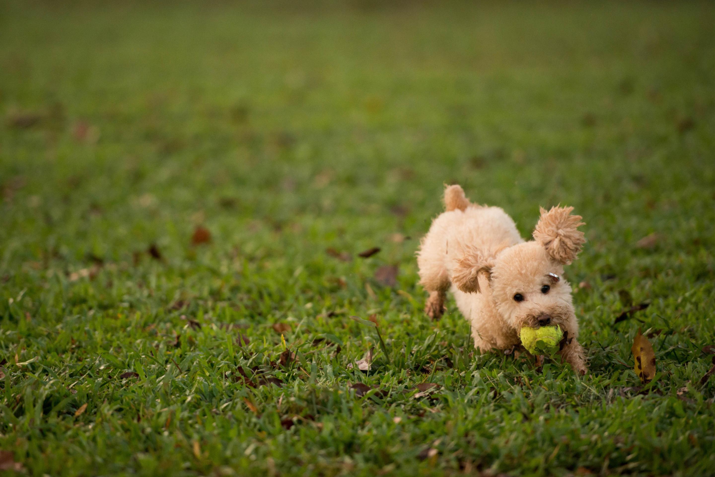 пес на лужайке без смс