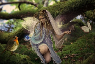 Free Butterfly Fairy Picture for Android, iPhone and iPad