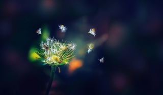 Dandelion Seeds Macro Background for Android, iPhone and iPad