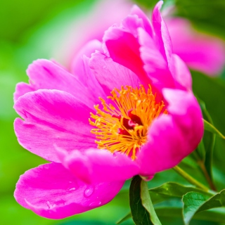 Free Bright Pink Flower Picture for 128x128