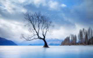 Lonely Tree At Blue Landscape Wallpaper for Android, iPhone and iPad