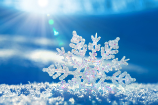 Snowflake In Sunlight Picture for Android, iPhone and iPad